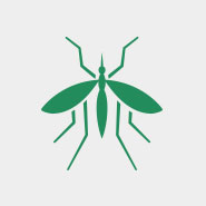 green mosquito logo on a gray background